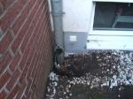 Wasserschaden, Regenfallleitung, 1034